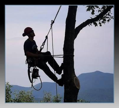 Trickytrees Tree Felling