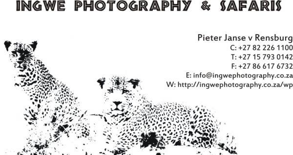 Ingwe Photography & Safaris