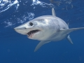 Marine Dynamics Shark Tours