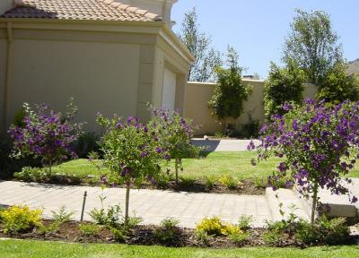 Lavender & Thyme Lanscaping