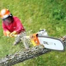 Western Province Tree Felling & Landscaping