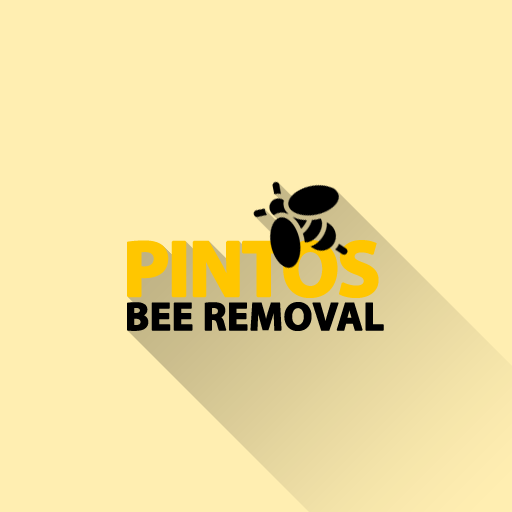 Pintos Bee Removal