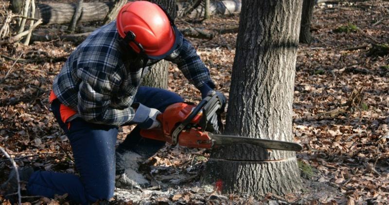 RD Tree Felling